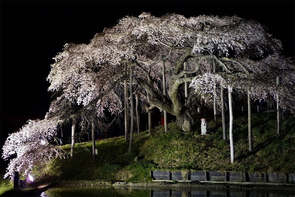 中島の地蔵桜 階段工事